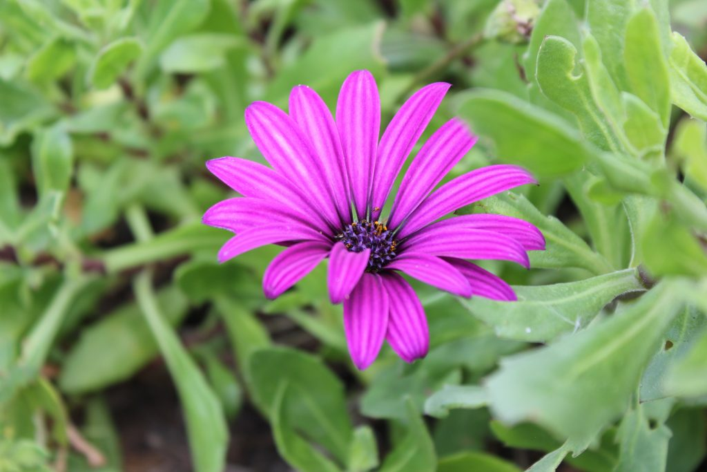 FAQ: Purple flower surrounded by greenery
