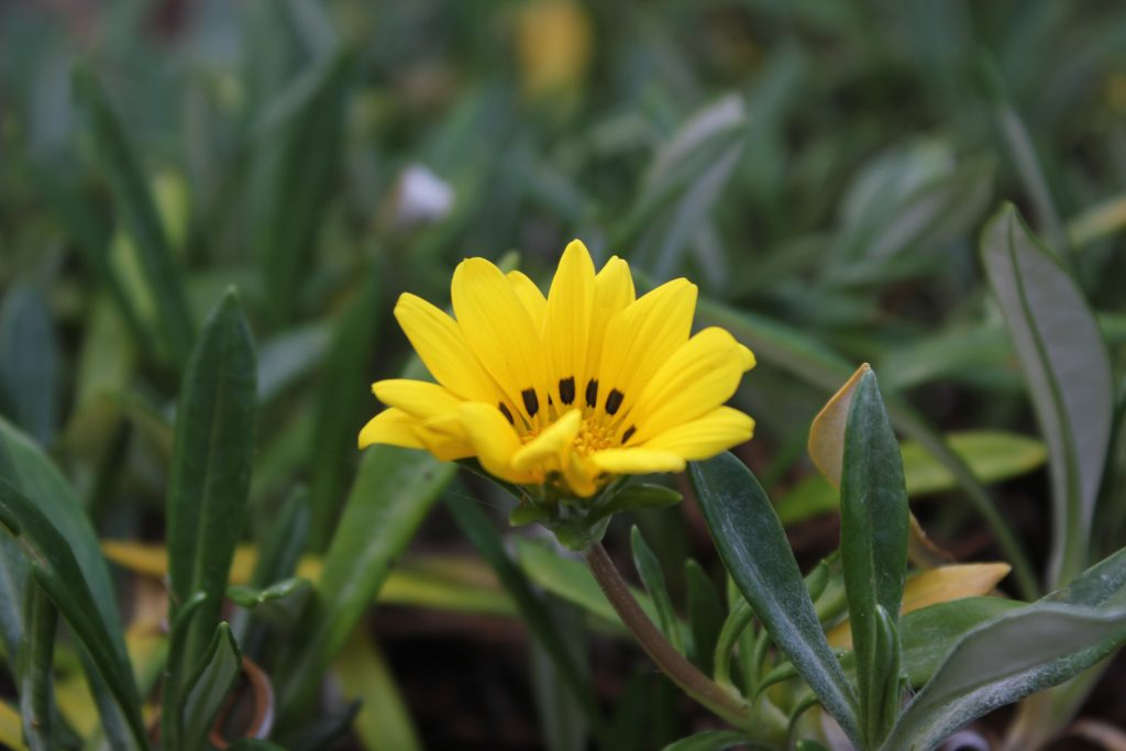 Welcome to Dance Therapy: Yellow flower surrounded by green foliage